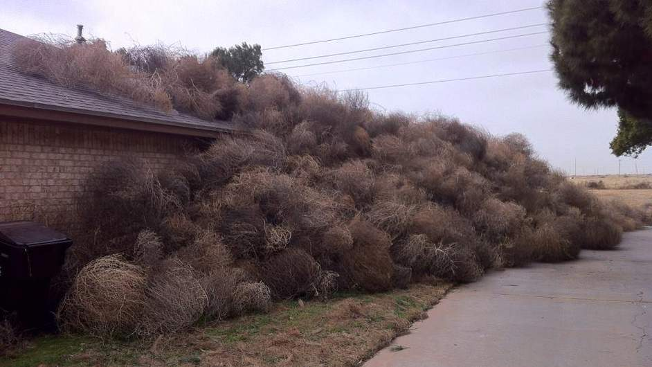 tumbleweeds-cover-texas-home-kwes-tv-1-942x530